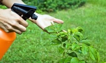 Como hacer un pesticida orgánico en casa | Jardineria | Horticultura | Scoop.it