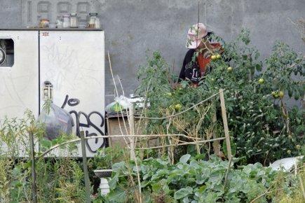 Un sans-abri cultive son potager sous unviaduc | Émilie Bilodeau | Montréal | Innovations sociales | Scoop.it