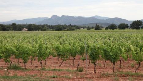 Château Sainte Roseline : grand cru rosé et site classé de Provence | Epicure : Vins, gastronomie et belles choses | Scoop.it