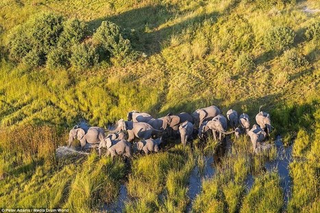 British photographer Peter Adams captures wildlife shots above the Okavango Delta - Daily Mail | TOURISM CONTENT CURATOR | Scoop.it
