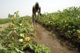 Nigeria Faces Another Long-Running Conflict Between Farmers and Herders in the ... - Atlanta Black Star | Alternative Dispute Resolution, Mediation, and Restorative Justice | Scoop.it