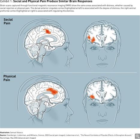 Managing with the Brain in Mind   NeuroLeadership   Scoop.it