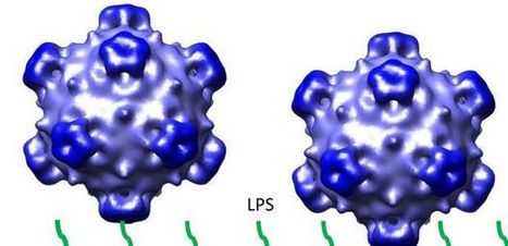 The Virus That Makes a Disposable Syringe | UANews | CALS in the News | Scoop.it