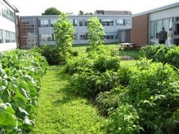 Model Farm-to-School Initiative: The Framingham High School Garden - MetroWest Moves | Developing Policies for Improved Access to Healthier Foods | Scoop.it