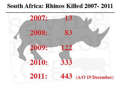 South Africa's Rhino Death Toll 'At Least' 443 for 2011 | Rhino Horn is NOT Medicine | What's Happening to Africa's Rhino? | Scoop.it
