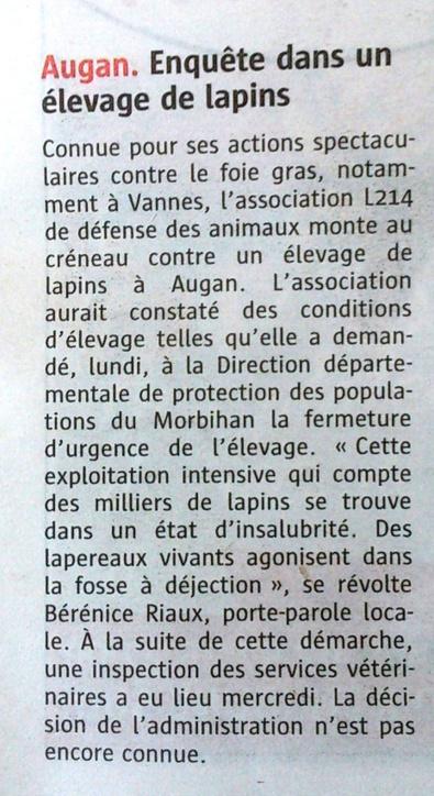 Enquête dans un élevage de lapins / Le Télégramme   Lapins - Revue de presse L214   Scoop.it