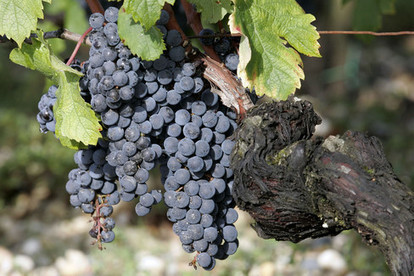 #Bordeaux 2014 Pricing Highlights Value in Older Vintages | Vitabella Wine Daily Gossip | Scoop.it