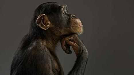 Should we engineer animals to be smart like humans? | leapmind | Scoop.it