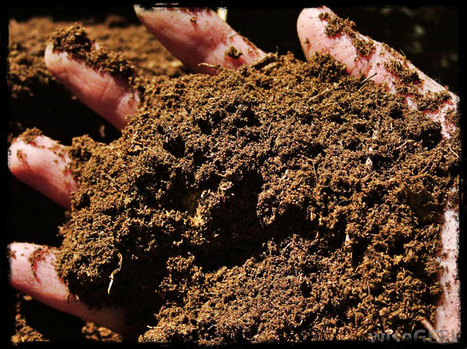 Why Is a Healthy Garden Soil Important? | Garden and Outdoor Australia 2 | Scoop.it