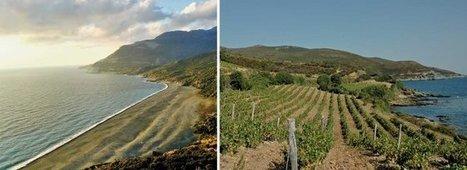Oenotourisme en Corse: Capi Corsu, la péninsule de l'île de Beauté | Images et infos du monde viticole | Scoop.it