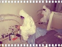 Overlooked Parts of the Home that may need Mold Testing | How to Reduce and Prevent Mold at Home | Scoop.it