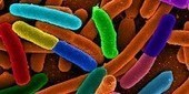 Cell-Based Computing Goes Analog - Scientist | Synthetic Biology Technology | Scoop.it