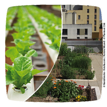 APPEL à Idées de Projet Innovant sur l'AGRICULTURE Urbaine | URBANmedias | Scoop.it