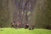 Les chasseurs : participants actifs de l'équilibre sylvo-cynégétique | Chasse dans le Nord... et ailleurs | Scoop.it
