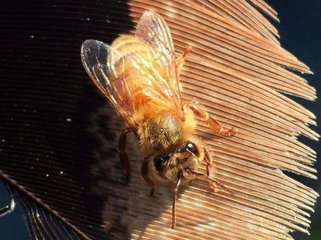 La toxicité des pesticides grandeur nature | La recherche en apiculture | Scoop.it