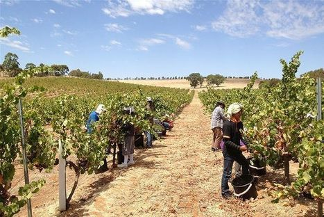Wine industry leading way on climate adaptation - ABC News (Australian Broadcasting Corporation) | Ecosystem and community-based climate adaptation | Scoop.it