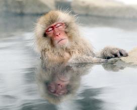 Best nature pictures of 2012 | Actus vues par TousPourUn | Scoop.it