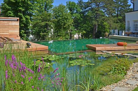 Les Rois des Grenouilles BIOTOP 2013 | BIOTOP - Baignades & piscines  ecologiques - Jardin | Scoop.it