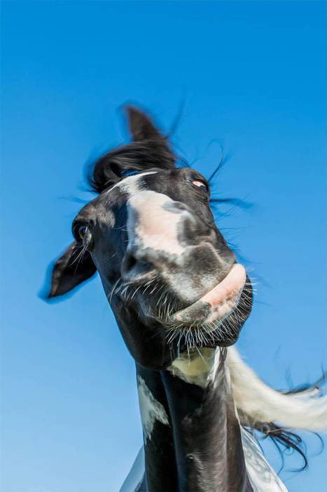 Comedy Wildlife 2016 – Awarding the most amusing animal photographs | Strange days indeed... | Scoop.it