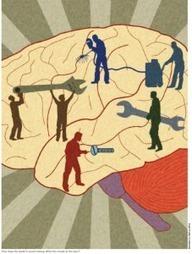 The neuroscience of leadership | Blog del Instituto de Innovación Social | Educación, Ciencia, Arte y Tecnología | Scoop.it