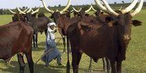 Le Niger veut se doter d'un projet de loi contre l'accaparement des terres d'ici trois mois   Daraja.net   Scoop.it