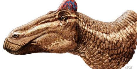 Dinosaurus met een hanenkam ontdekt - Scientias.nl | KAP-VanRoyBrian | Scoop.it