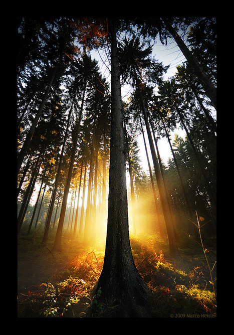 40 Naturally Beautiful Photos of Trees   PSDFan   Ecological   Scoop.it