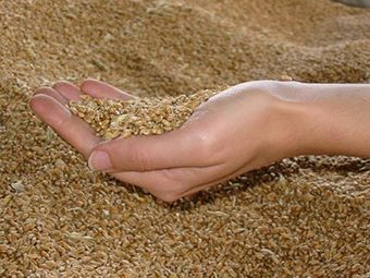 L'ONU annonce une crise alimentaire mondiale pour 2013 | #Road to Dignity | Scoop.it