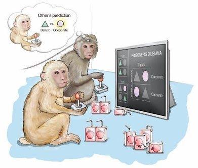 I neuroni che prevedono le intenzioni degli altri | Neuroscienze applicate | Scoop.it