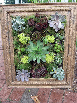 Picture perfect succulents | Gardening Life | Scoop.it