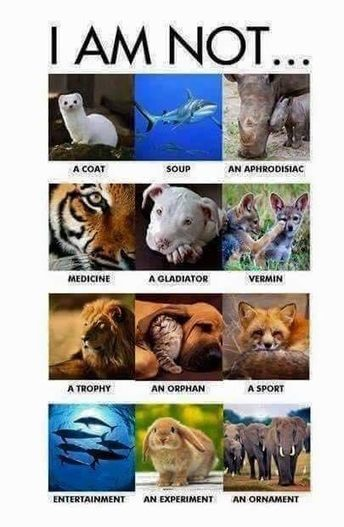 If Animals Could Speak, Here's What They'd Say [Infographic] | Wildlife Conservation: People and Stories | Scoop.it