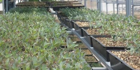 2012/03/20 Destinan 2400 hectáreas al cultivo de orgánicos en BC ... | Cultivos Hidropónicos | Scoop.it