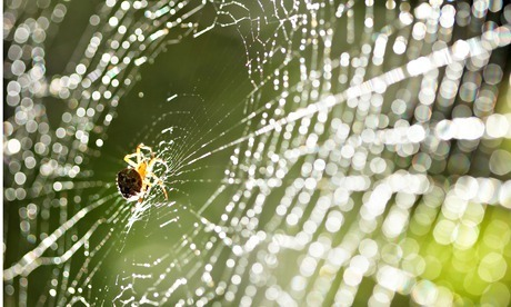 Why spiders may be the human races ultimate spin doctors | GarryRogers Biosphere News | Scoop.it