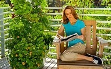 Aeroponic Vertical Organic Growing: Good Food for Less : Natural ... | Aquaponics~Aquaculture~Fish~Food | Scoop.it