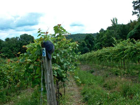 Touring the wineries along New York's Shawangunk Wine Trail | Winecations | Scoop.it