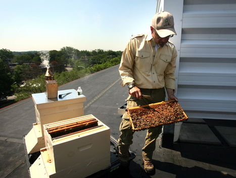 Honeybee colonies key to sustainability plan at Valley Hospital - NorthJersey.com | sustainability | Scoop.it