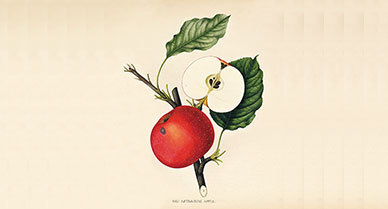 How to Trademark a Fruit | Herbaria | Scoop.it