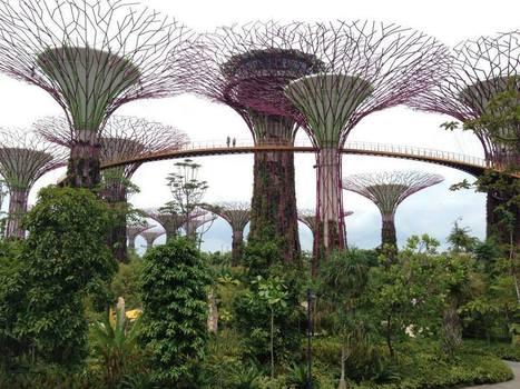 LEPETITJOURNAL.COM - Singapour, l'économie de la connaissance | Entrepreneuriat & International | Scoop.it