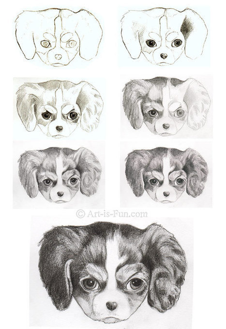 How to Draw a Puppy: Learn How to Draw Puppies! | Drawing and Painting Tutorials | Scoop.it