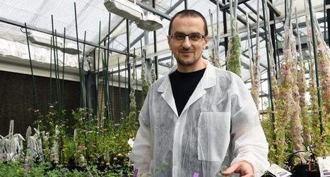 «La plante peut se protéger naturellement» | Agriculture durable | Scoop.it