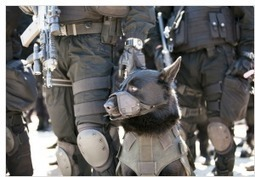Rising Police Aggression A Telling Indicator Of Our Societal Decline | Sustain Our Earth | Scoop.it