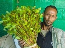 Khat cultivation in Ethiopia fuels economy, reduces deforestation | Agricultural Biodiversity | Scoop.it
