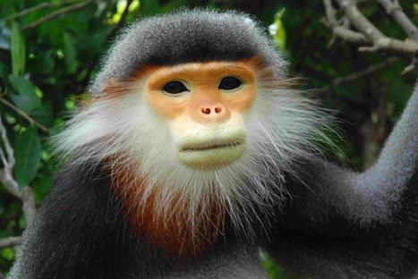 Meet the world's endangered primates | Conservation Biology, Genetics and Ecology | Scoop.it
