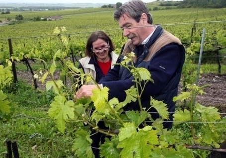 Le plus grand domaine viticole Bio de Poitou-Charentes se trouve à Segonzac | The Cognac and its vineyards | Scoop.it