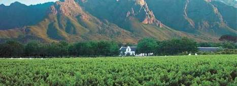 Consumers Clueless About Chenin Blanc | Wine in the World | Scoop.it