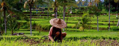 L'agroécologie peut doubler la production alimentaire mondiale en 10 ans, selon l'ONU | décroissance | Scoop.it