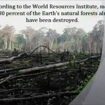 Deforestation - TeacherTube | Rainforest Research | Scoop.it