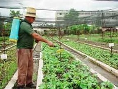 Urban Agriculture in Cuba - High Yields...Naturally | YOUR FOOD, YOUR HEALTH: #Biotech #GMOs #Pesticides #Chemicals #FactoryFarms #CAFOs #BigFood | Scoop.it