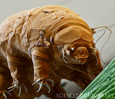 How Tardigrades Saved The Enterprise | Biosciencia News | Scoop.it