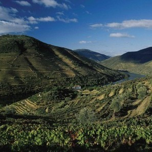Port at the crossroads | Wine in the World | Scoop.it